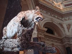 Animal mounted on a branch ready to pouce into the dome at the Natural History Museum in Vienna, Austria