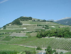 Vineyards of Canton Valais